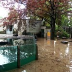 prague-zoo-flood-2013
