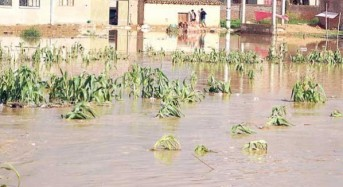 More Rain and Flood Misery for Bolivia