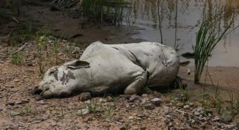 Bolivia Farms Decimated by Floods