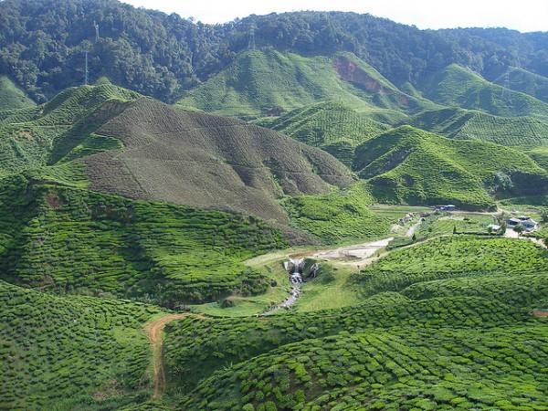 Cameron Highlands - tea and forest. Photo:  Khairil Yusof