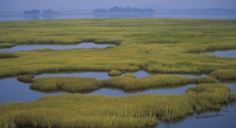 Wetlands Can Reduce CO2 and Floods