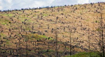 Ten African Nations Aim to Restore 31 Million Hectares of Forest