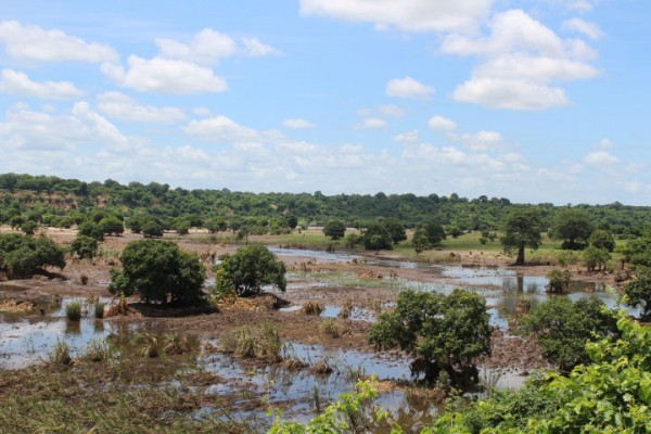 Wide areas of Malawi, including crops, have been damaged by the floods. Photo: IFRC