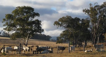 Queensland Farmers Warned of Flood-Related Diseases in Livestock