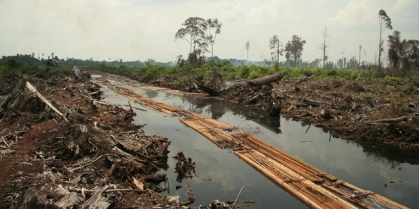 Last timber from an Indonesian peat swamp forest destroyed for oil palm plantation. Image: Wakx via Flickr