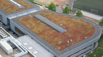 How Green Roofs Can Protect City Streets From Flooding