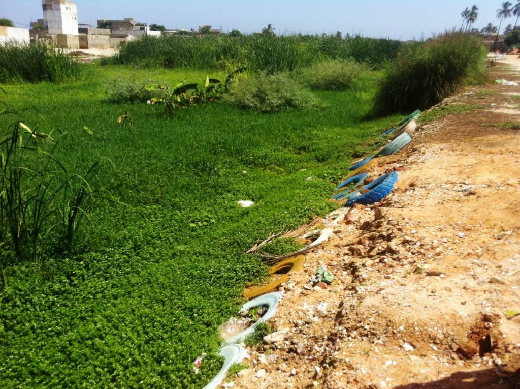 A view of overgrown floodwater retention basins in the Béne Barack neighbourhood, in the eastern suburbs of Senegal, before a community-organised cleanup. TRF/Megan Rowling