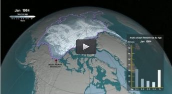 NASA Reveals How Arctic Sea Ice Is Losing Its Bulwark Against Warming Summers