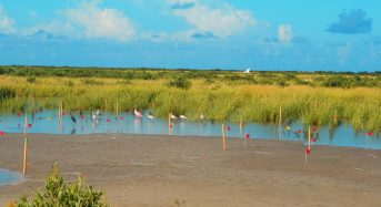 Changes in Rainfall and Temperature Could Transform World's Coastal Wetlands