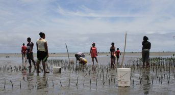 Fiji Villagers Plant Mangroves in Race Against Rising Seas