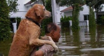 Floods and Pet Rescue