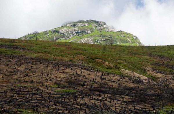Deforestation, Mount Mulanje, Malawi. Photo copyright: Marie-Marthe Gagnon Used here with permission.