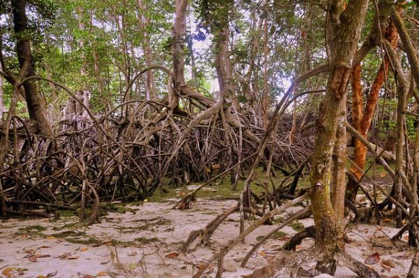 mangroves - natural coastal protection