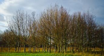 UK – Plans to Plant 50 Million Trees to Help Mitigate Flooding