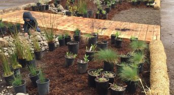 Depave – the Community-Based Approach to Storm Water Management