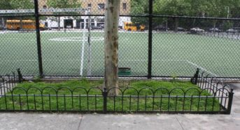 Study Finds City Trees in Protected Pits Absorb Runoff Water 6 Times Faster