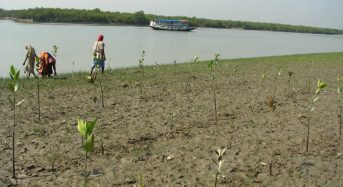 As Tides Rise, Indian Villagers Find a Friend in Mangroves