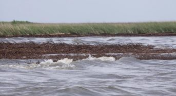 Loss of Wetland Vegetation Increases Rate of Shoreline Erosion by 100%