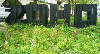 Water-Smart Green Roofs and Plazas Make a Splash in Rotterdam