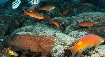Houston Flooding Polluted Reefs More Than 100 Miles Offshore Says Study