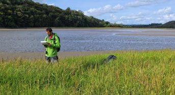 Coastal Wetlands Are Nature's Flood Defences, Study Shows